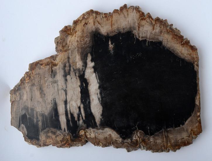 Versteinerte Holzscheibe